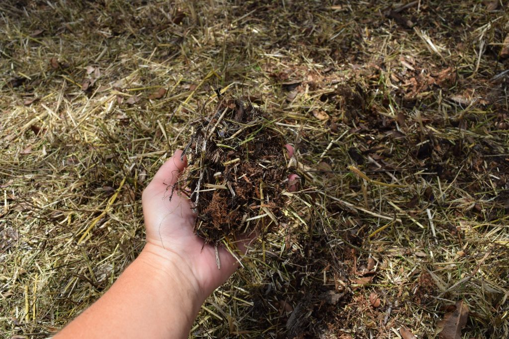 Lightly mulch to help retain moisture and reduce weed infestations