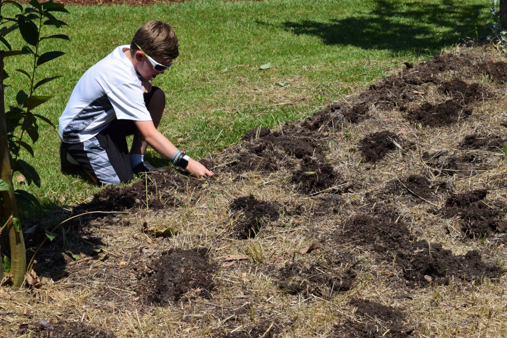 Replant the bed by sowing seed directly in soil